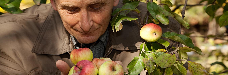 ARCHE NOAH Obstbaumpatenschaft